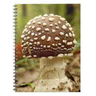 Carnet de photo de champignon de casquette de