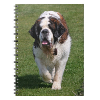 Carnet de photo de chien de St Bernard beau