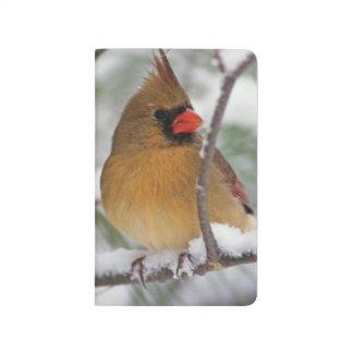 Carnet De Poche Cardinal du nord féminin dans le pin neigeux,