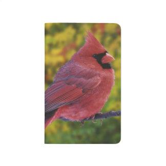 Carnet De Poche Cardinal du nord masculin en automne, Cardinalis