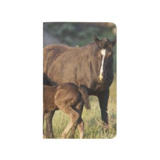 Carnet De Poche Chevaux sauvages au parc national de Theodore