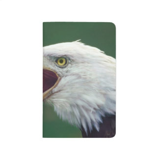 Carnet De Poche Eagle chauve (leucocephalus de Haliaeetus)