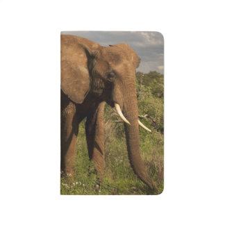 Carnet De Poche Éléphant africain, africana de Loxodonta, dans a