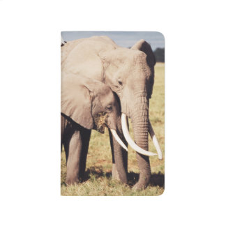 Carnet De Poche Éléphant de mère avec des jeunes