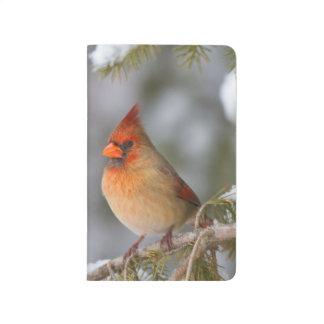 Carnet De Poche Femelle cardinale du nord dans l'arbre impeccable