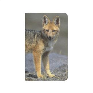 Carnet De Poche Fox andin, (culpaeus de Dusicyon), Paramo le