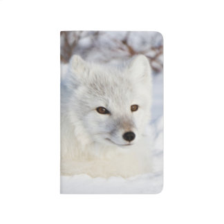 Carnet De Poche Fox arctique en hiver