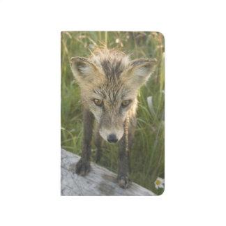 Carnet De Poche Fox rouge, fulva de Vulpes sur le rondin, fleurs