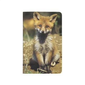 Carnet De Poche Fox rouge, vulpes de Vulpes, jeune au repaire,