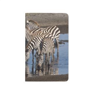 Carnet De Poche L'Afrique. La Tanzanie. Zèbres buvant chez Ndutu