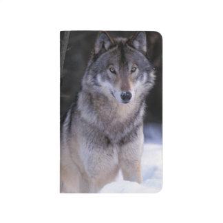 Carnet De Poche L'Amérique du Nord, Canada, Canada oriental, loup