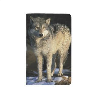 Carnet De Poche L'Amérique du Nord, Etats-Unis, Minnesota. Loup