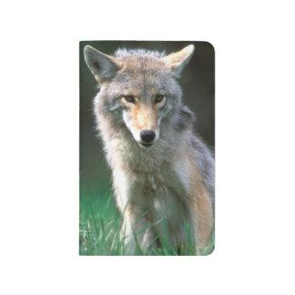 Carnet De Poche Le Canada, Colombie-Britannique, coyote (latrans