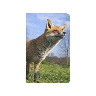 Carnet De Poche Le R-U, Angleterre. Vulpes de Vulpes de Fox rouge)