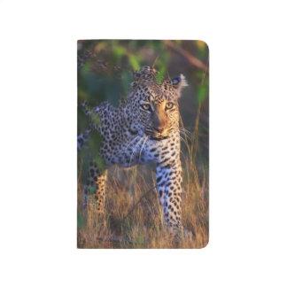 Carnet De Poche Léopard (Panthera Pardus) comme vu dans le masai