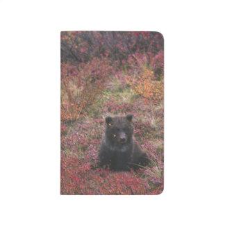 Carnet De Poche Les Etats-Unis, Alaska, parc national de Denali.