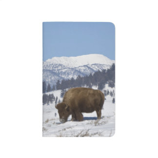 Carnet De Poche Les Etats-Unis, WY, Yellowstone NP, bison de bison