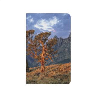 Carnet De Poche Les Etats-Unis, Wyoming, Teton grand NP. Un cèdre
