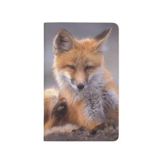 Carnet De Poche renard rouge, vulpes de Vulpes, chiot se rayant,