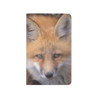 Carnet De Poche renard rouge, vulpes de Vulpes, dans des couleurs