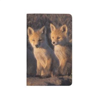 Carnet De Poche renard rouge, vulpes de Vulpes, kits en dehors de