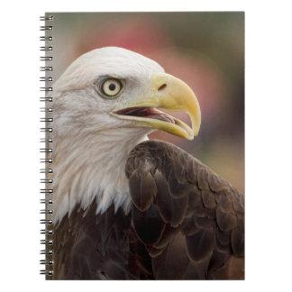"""Carnet """"Eagle chauve américain """""""