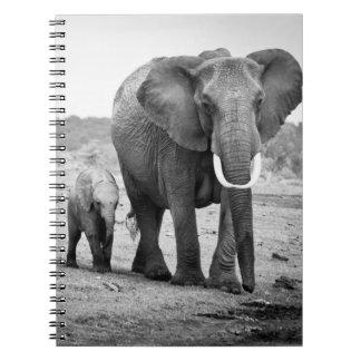 Carnet Éléphant africain et veaux | Kenya, Afrique