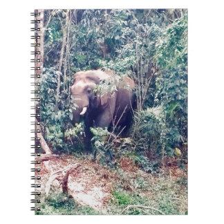 Carnet Éléphant en Thaïlande