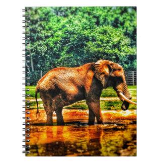 Carnet éléphant fullsizeoutput_1104