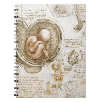 Carnet Études de Leonardo da Vinci du foetus dans