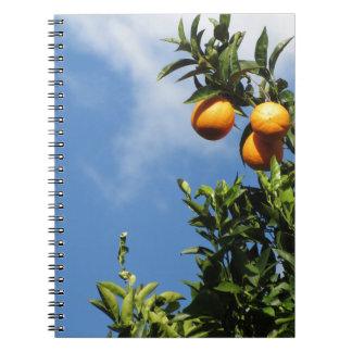 Carnet Fruits oranges accrochant sur l'arbre contre le