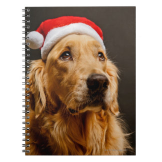 Carnet Golden retriever posant pour son Noël