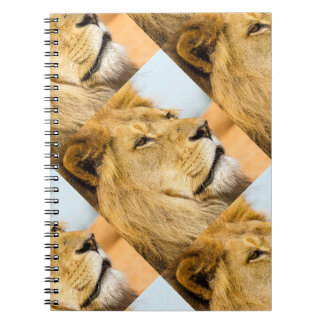 Carnet Grand lion regardant loin