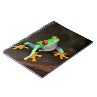Carnet Grenouille tropicale de Red Eye - Agalychnis