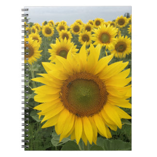 Carnet jaune lumineux de photo de tournesols