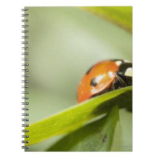 Carnet Ladybird sur la feuille, coccinelle sur la feuille