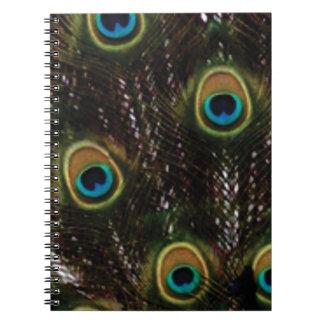 Carnet le paon observe des plumes