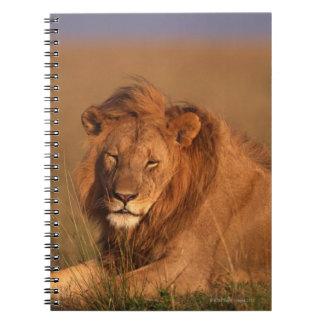 Carnet Lion