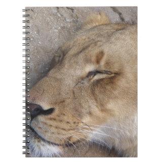 Carnet Lionne de sommeil