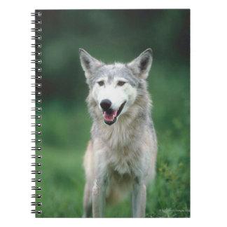 Carnet Loup gris