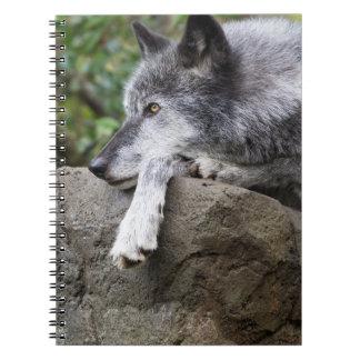Carnet Loup noir de détente