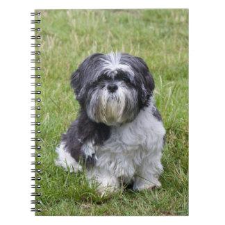 Carnet mignon de photo de chien de Shih Tzu beau