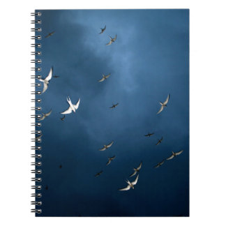 Carnet Miscellaneous - Arctic Tern & Blue Sky Pattern