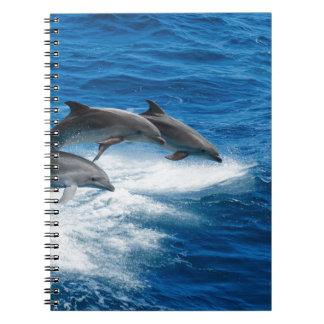 Carnet Miscellaneous - Dolphins Jump Thirteen