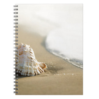 Carnet Miscellaneous - Sand & Shells Patterns Six