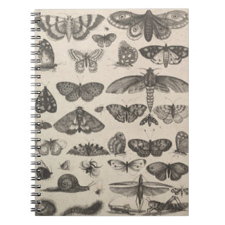 Carnet Notes vintages de champ de lépidoptères