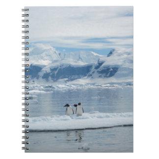 Carnet Pingouins sur un iceberg