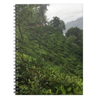 Carnet Plantation de thé