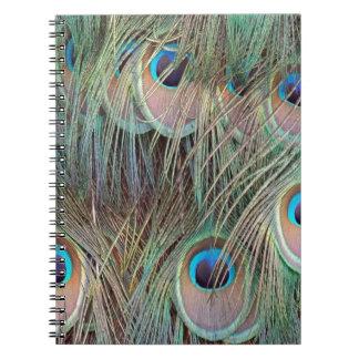 Carnet plumes de paon