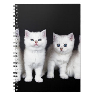 Carnet Rangée de quatre chatons blancs sur background.JPG